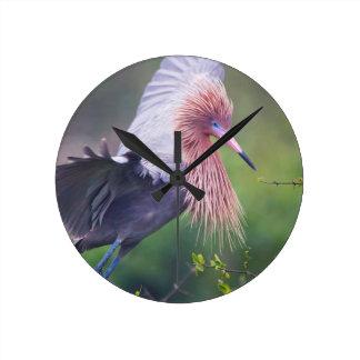 Reddish Egret (Egretta Rufescens) Adult Round Clock