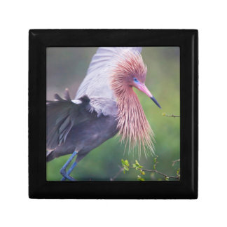 Reddish Egret (Egretta Rufescens) Adult Small Square Gift Box