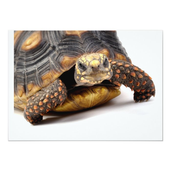 Redfoot Turtle Gifts 13 Cm X 18 Cm Invitation Card