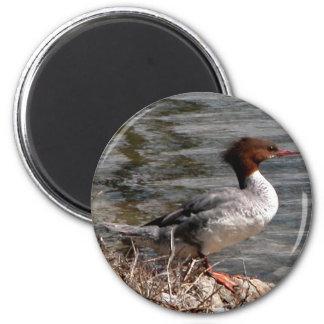 Redhead 6 Cm Round Magnet