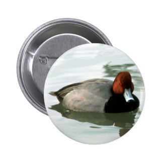 Redhead Drake (untitled) 6 Cm Round Badge
