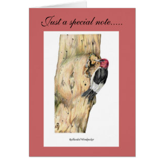 Redheaded Woodpecker Card