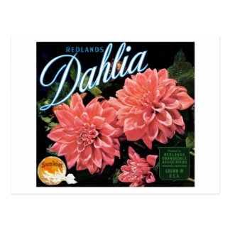 Redlands Dahlia Brand Postcard
