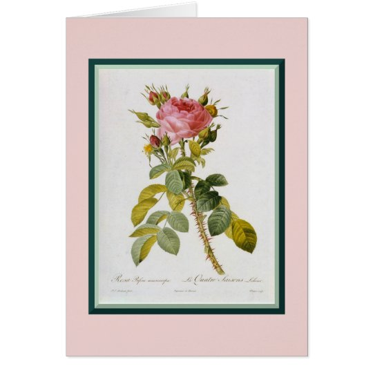Redoute Rose Single Stem Card