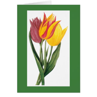 Redoute Tulip Notecard