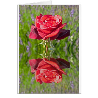 RedRoseReflect.jpg Greeting Card