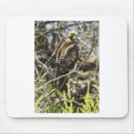 Redtailed Hawk Mouse Pad