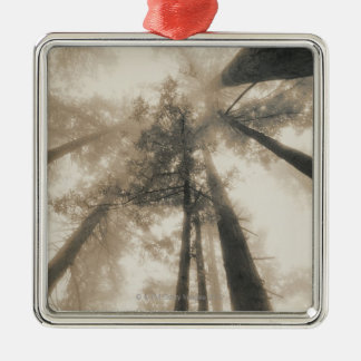 Redwood Forest, Northern California Christmas Ornament