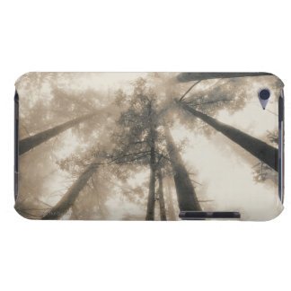 Redwood Forest, Northern California iPod Case-Mate Case