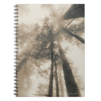Redwood Forest, Northern California Spiral Notebook