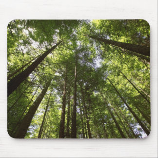 Redwood Forest, Rotorua, New Zealand 2 Mouse Pad