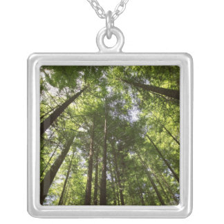 Redwood Forest, Rotorua, New Zealand 2 Silver Plated Necklace