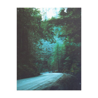 Redwood Grove Lane California Gallery Wrapped Canvas