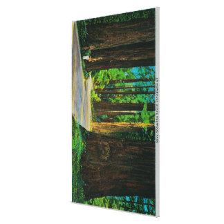 Redwood Highway in Humboldt State Redwood Park Canvas Prints