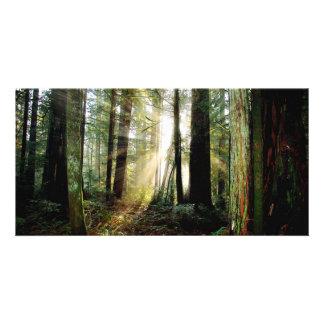 Redwood Morning Customised Photo Card