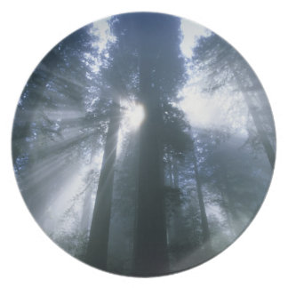 Redwood National Park, Del Norte County, foggy Plate