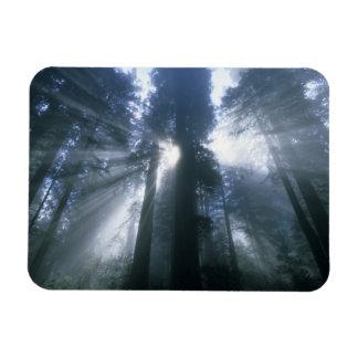 Redwood National Park, Del Norte County, foggy Rectangular Photo Magnet
