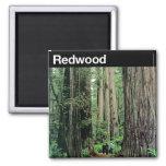 Redwood National Park Fridge Magnet