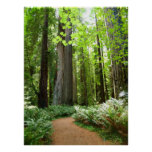 Redwood Trail Posters