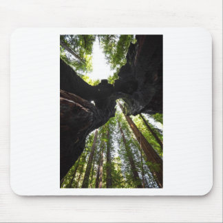 Redwood Trees and Trunk Mouse Pad