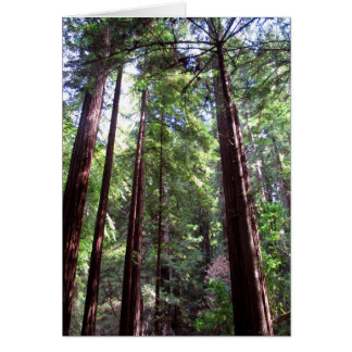 Redwood Trees Greeting Card