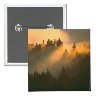 Redwood trees in coastal fog, Marin County, 15 Cm Square Badge