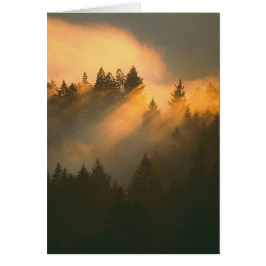 Redwood trees in coastal fog, Marin County, Card