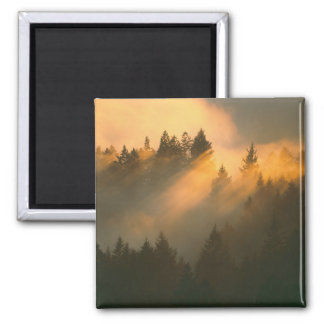 Redwood trees in coastal fog Marin County Refrigerator Magnet
