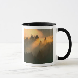 Redwood trees in coastal fog, Marin County, Mug