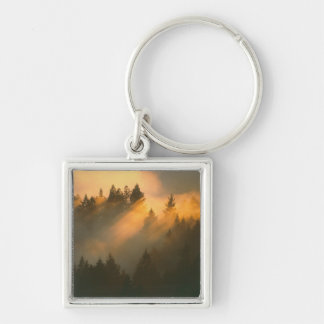 Redwood trees in coastal fog, Marin County, Silver-Colored Square Key Ring