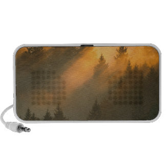 Redwood trees in coastal fog, Marin County, Mini Speakers