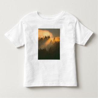 Redwood trees in coastal fog, Marin County, Toddler T-Shirt