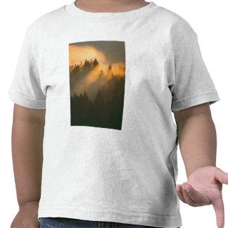 Redwood trees in coastal fog, Marin County, T-shirts