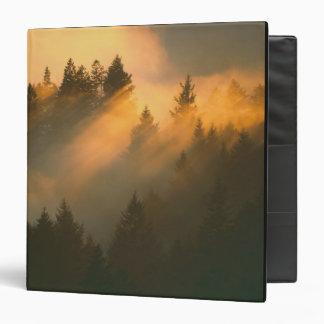 Redwood trees in coastal fog, Marin County, Vinyl Binders