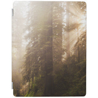 Redwood Trees in Morning Fog with Sunrays iPad Cover