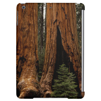Redwood Trees, Sequoia National Park.