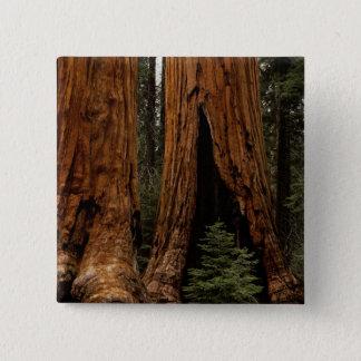 Redwood Trees, Sequoia National Park. 15 Cm Square Badge