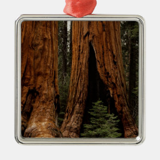 Redwood Trees, Sequoia National Park. Christmas Ornament