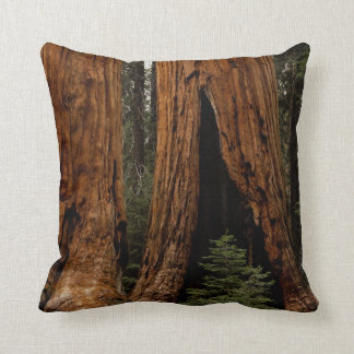 Redwood Trees, Sequoia National Park. Cushion