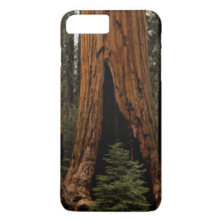 Redwood Trees, Sequoia National Park. iPhone 8 Plus/7 Plus Case