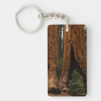 Redwood Trees, Sequoia National Park. Key Ring