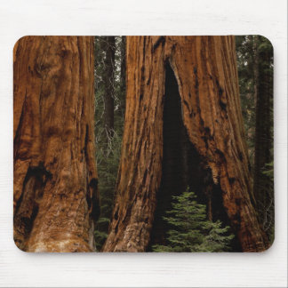 Redwood Trees, Sequoia National Park. Mouse Mat