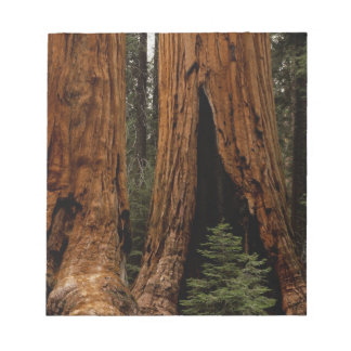 Redwood Trees, Sequoia National Park. Notepad