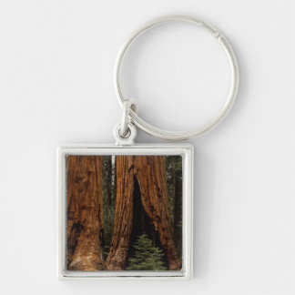 Redwood Trees, Sequoia National Park. Silver-Colored Square Key Ring