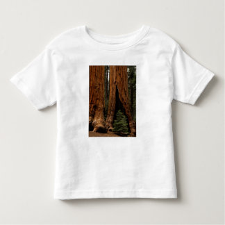 Redwood Trees, Sequoia National Park. Toddler T-Shirt