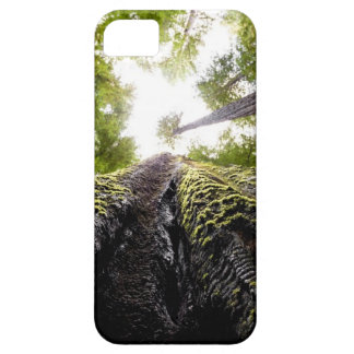 Redwood Trees with Mossy Trunk iPhone 5 Covers