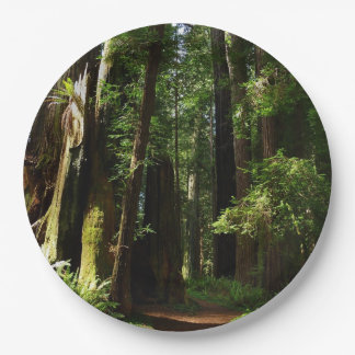 Redwoods and Ferns at Redwood National Park Paper Plate