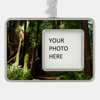 Redwoods and Ferns at Redwood National Park Silver Plated Framed Ornament