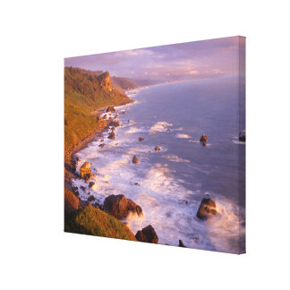 Redwoods coastline, California Canvas Print