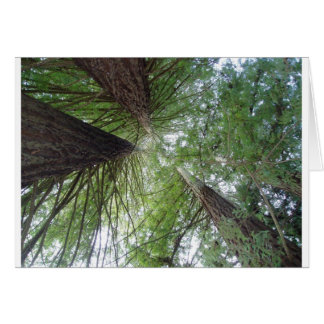 Redwoods Greeting Card